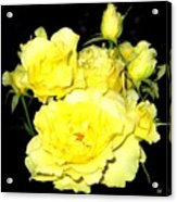 Heaven Scent Acrylic Print