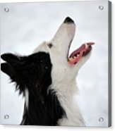 Heavenly Dog Acrylic Print