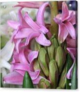 Heavenly Hyacinths Acrylic Print
