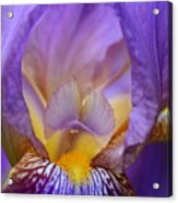 Heavenly Iris Acrylic Print