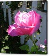 Heavenly Rose Acrylic Print
