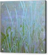 Heaven's Cattails #1 Acrylic Print