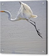 Heavy Flight Acrylic Print