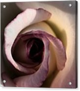 Heavy Rose Acrylic Print