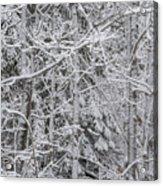 Heavy Snow Acrylic Print
