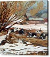 Heber Dairy Acrylic Print