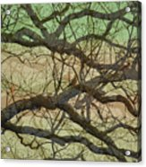 Hedge 3 Acrylic Print