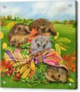Hedgehogs Inside Scarf Acrylic Print