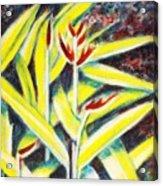 Heliconia 2 Acrylic Print