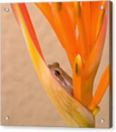 Heliconia And Frog Acrylic Print