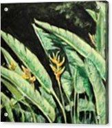 Heliconia Flower 7 Acrylic Print