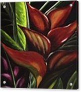 Heliconia Flower Acrylic Print