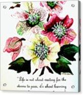 Helleborous Acrylic Print