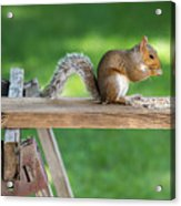 Hello Are You Gonna Eat All That? Chipmunk And Squirrel Acrylic Print