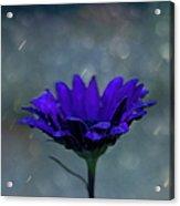 Hello Rain Acrylic Print