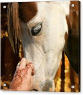 Henna And Pony Acrylic Print