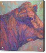 Henry's Red Angus Acrylic Print
