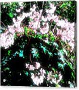 Her Diadem Acrylic Print by Eikoni Images