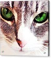 Her Emerald Eyes. Kitty Time Acrylic Print