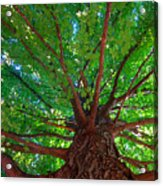 Her Leafy Arms Acrylic Print by Guy Ricketts