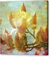 Herald Spring 8878 Idp_2 Acrylic Print