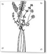 Herb Bouquet 2 Acrylic Print