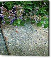 Herb Garden Walkway Acrylic Print