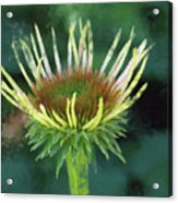Herbaceous Beginning Acrylic Print