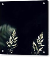 Herbs In Light With Fern Acrylic Print