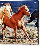 Herd Of Horses Acrylic Print