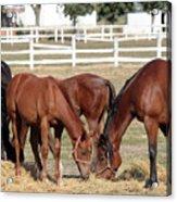 Herd Of Horses Ranch Scene Acrylic Print