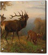 Herd Of Red Deer Acrylic Print