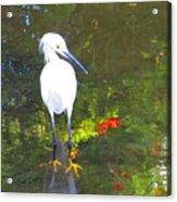 Here Fishy Acrylic Print