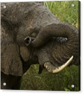 Here Is Mud In Your Eye Acrylic Print