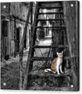 Here Kitty Kitty Kitty... Acrylic Print