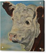 Hereford Profile Acrylic Print