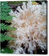 Mushroom Hericium Coralloid Acrylic Print