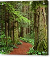 Heritage Forest 2 Acrylic Print