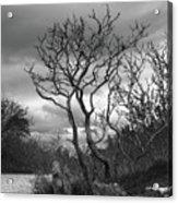 Hermit Island Tree 0912 Acrylic Print