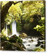 Hermon Stream Nature Reserve Banias Acrylic Print
