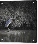 Heron 1 Artistic  Acrylic Print