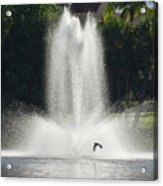 Heron Across A Fountain Acrylic Print