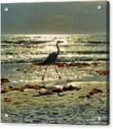 Heron Beachwalk Acrylic Print
