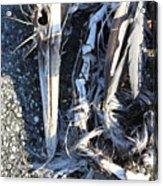Heron Bones Acrylic Print