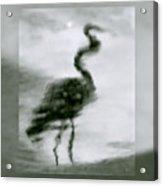Heron De Nacht Acrylic Print
