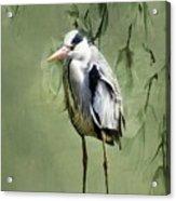 Heron Egret Bird Acrylic Print