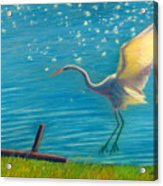 Heron Great White   Pastel   Acrylic Print