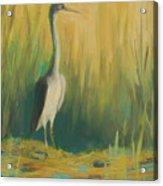 Heron In The Reeds Acrylic Print by Renee Kahn