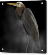 Heron On A Foggy Morning Acrylic Print