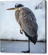 Heron On Ice Acrylic Print